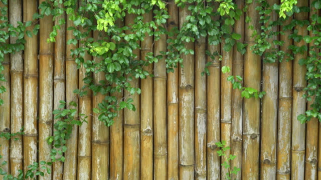 vídeos de stock e filmes b-roll de bamboo fence background. - cercado