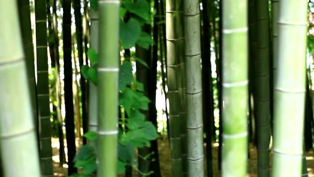 Bamboo forest at Takebayashi park handheld shot video