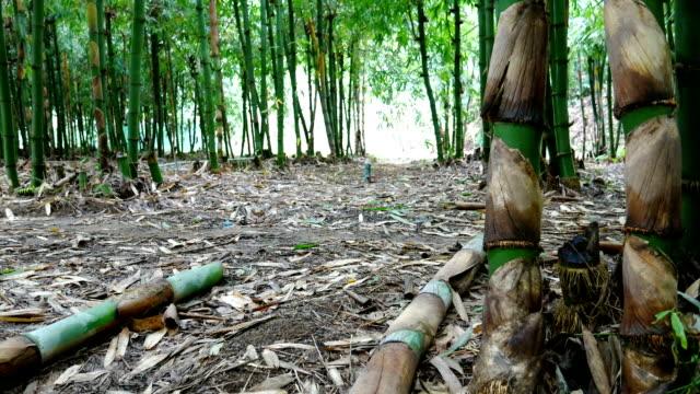 竹林スライダーによって撮影された映像。 - 笹点の映像素材/bロール