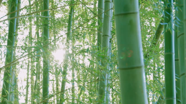 竹林光 - 笹点の映像素材/bロール