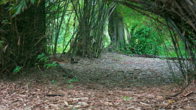 Bamboo forest in south east asia,Stabilized Shot, video
