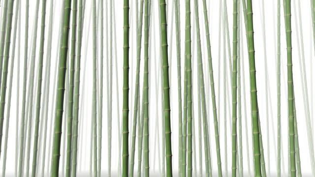 Bamboo forest in the wind (loopable) video