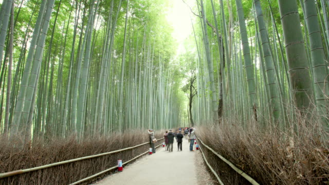 Bamboo Forest Japan video