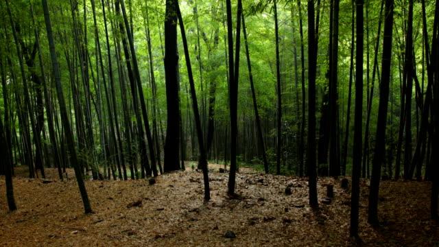 竹林タイムラプス - 笹点の映像素材/bロール