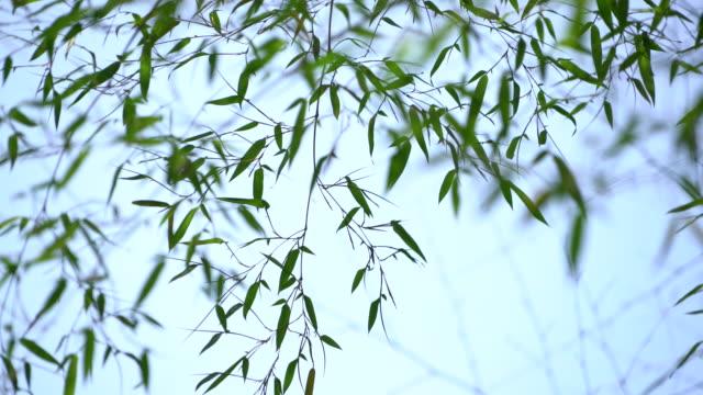 竹林  - 笹点の映像素材/bロール
