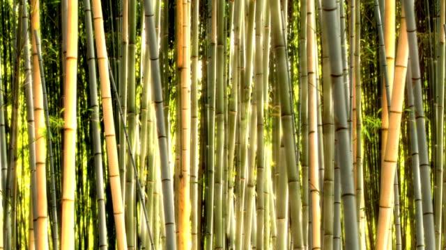 bamboo garden pan video
