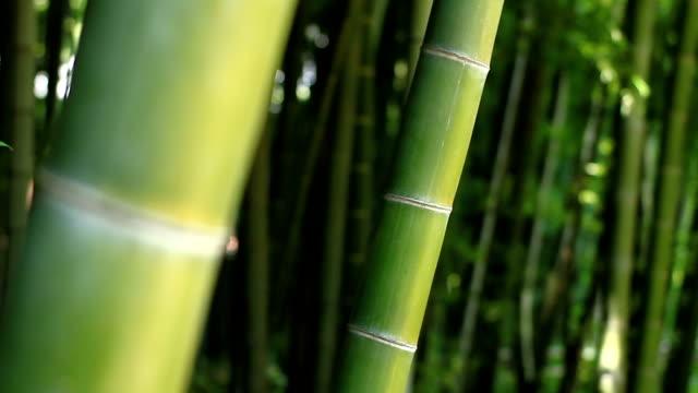 Bamboo in the forest at Takebayashi park back rack focus mild wind