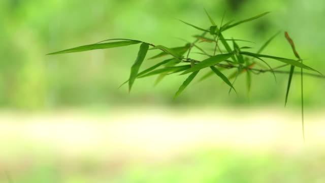 バックライト付きの笹の葉 - 笹点の映像素材/bロール