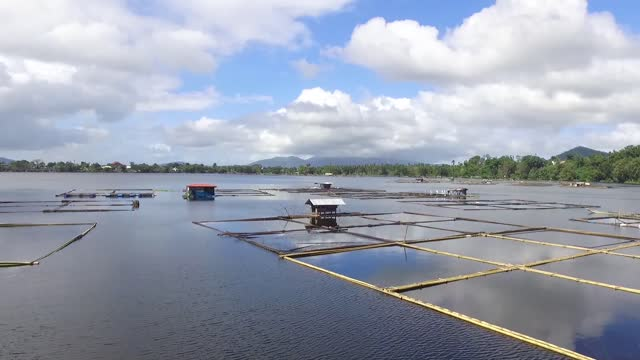 Bamboo tied together that build industry of floating fish cages on Sampaloc Lake. Drone aerial shot