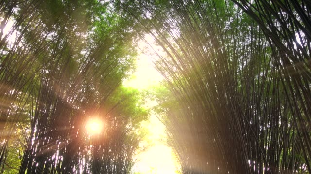 Bamboo Tunnel And Sunset Light Ray video
