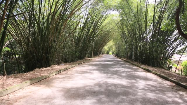 bamboo tunnel in undermines