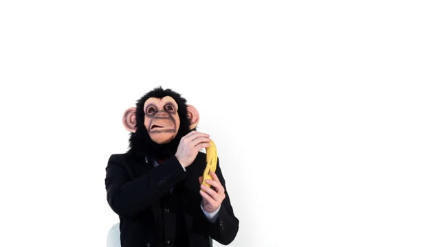Banana Business Monkey video