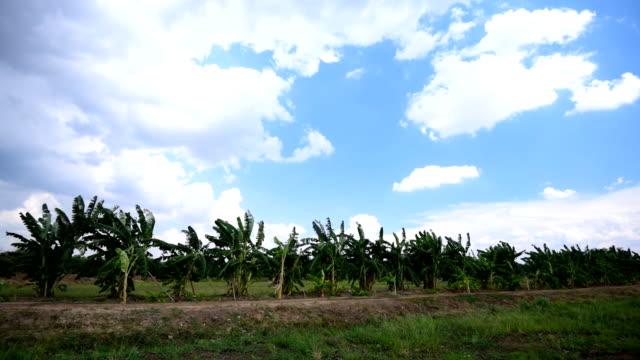 Banana Garden video