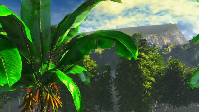 Banana plants video