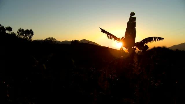 Banana Tree at Sunset (Guatemala) video