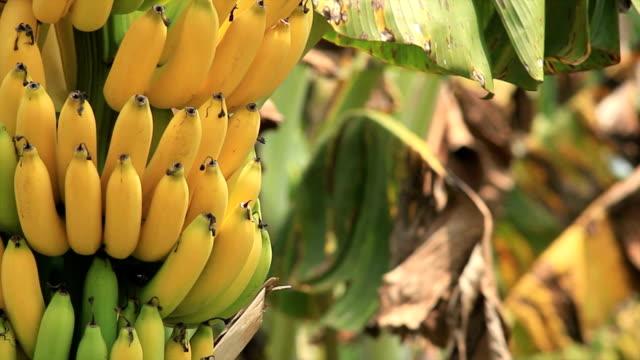バナナ - バナナ点の映像素材/bロール