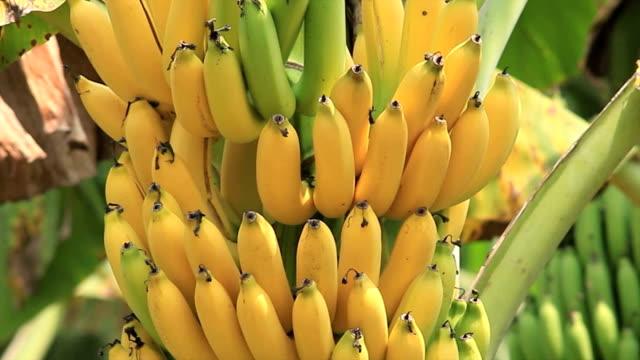 Banana video