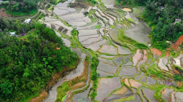 Banaue rice terraces, full of water, near a small village in Philippines. Wonderful agriculture in a valley in the middle of moutains in a beautiful day - aerial view with a drone 4K Banaue's rice terraces in the middle of a valley. One of the most beautiful agriculture in Philippines, with the most wonderful view.  Perfect landscape in an amazing place, with the respect of environment banaue stock videos & royalty-free footage
