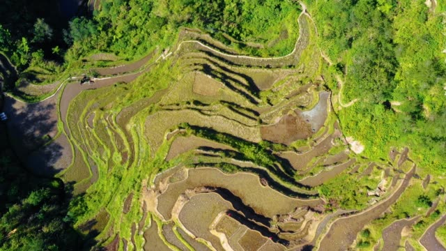 Banaue rice terraces, full of water, near a small village in Philippines. Wonderful agriculture in a valley in the middle of mountains in a beautiful day - aerial view with a drone 4K Banaue's rice terraces in the middle of a valley. One of the most beautiful agriculture in Philippines, with the most wonderful view.  Perfect landscape in an amazing place, with the respect of environment banaue stock videos & royalty-free footage