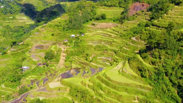 Banaue's green rice terraces near a small village in Philippines. Wonderful agriculture in a valley in the middle of mountains in a beautiful day - aerial view with a drone 4K Banaue's rice terraces in the middle of a valley. One of the most beautiful agriculture in Philippines, with the most wonderful view.  Perfect landscape in an amazing place, with the respect of environment banaue stock videos & royalty-free footage