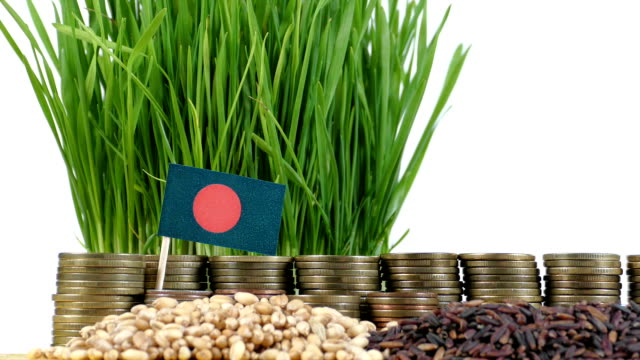 Bangladesh flag waving with stack of money coins and piles of wheat video