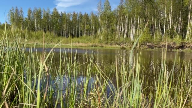 stockvideo's en b-roll-footage met bank van een bosmeer - natuurgrond