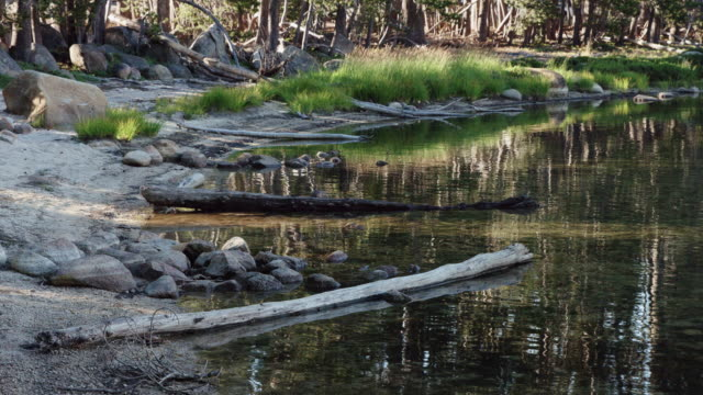 Banks of the Merced River, Yosemite National Park video