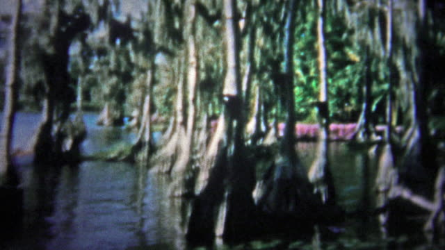 FT. LAUDERDALE, USA - 1957: Banyan tree forest before technology put undue pressure on the ecosystem. video