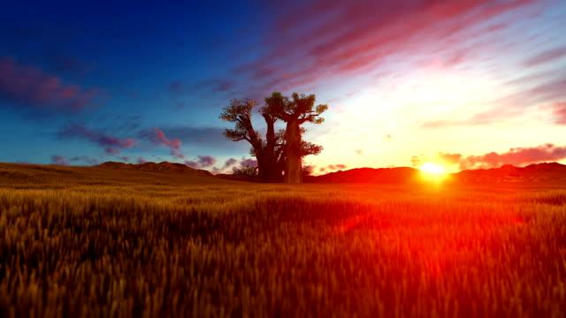 baobab-baum auf afrikanische landschaft bei sonnenuntergang - affenbrotbaum stock-videos und b-roll-filmmaterial