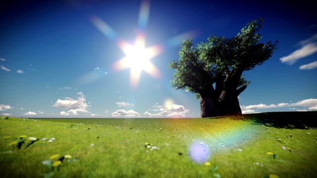 baobab-baum untergeht sonne schöne szene - affenbrotbaum stock-videos und b-roll-filmmaterial