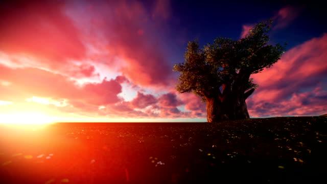 baobab-baum mit wolken über laufende - affenbrotbaum stock-videos und b-roll-filmmaterial