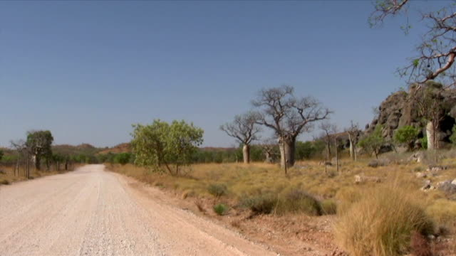 HD: Baobab Trees By The Gibb River Road video