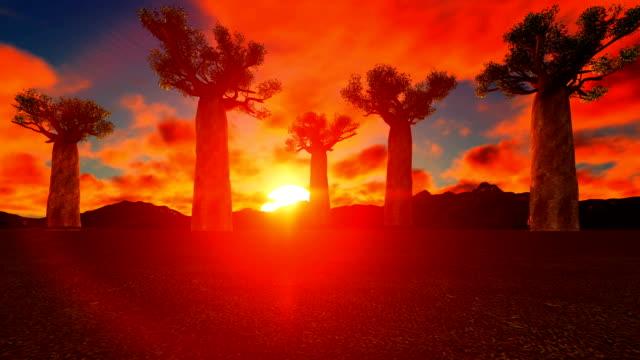 baobab-bäume im afrikanischen sonnenuntergang - affenbrotbaum stock-videos und b-roll-filmmaterial