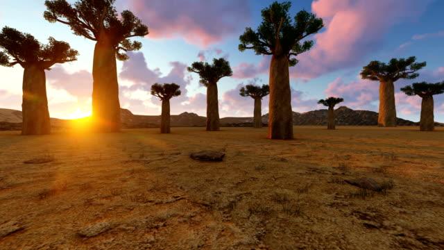 baobab-bäume auf afrikanischer landschaft - affenbrotbaum stock-videos und b-roll-filmmaterial