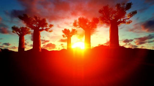 Baobab Trees Rise To The Sky On A Beautiful Sunset Baobab Trees Rise To The Sky On A Beautiful Sunset baobab tree stock videos & royalty-free footage