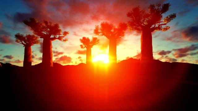 baobab-bäume steigen in den himmel, auf einen wunderschönen sonnenuntergang - affenbrotbaum stock-videos und b-roll-filmmaterial
