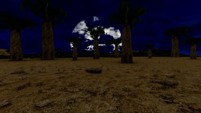 Baobab trees with beautiful moon Baobab trees with beautiful moon baobab tree stock videos & royalty-free footage