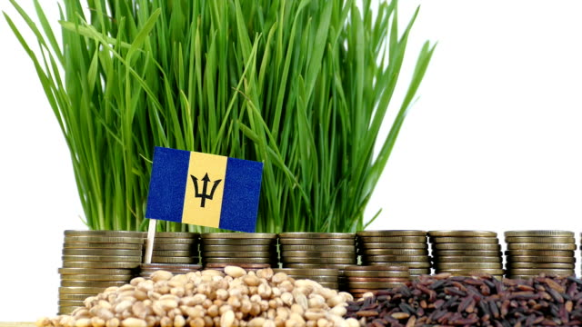 Barbados flag waving with stack of money coins and piles of wheat video