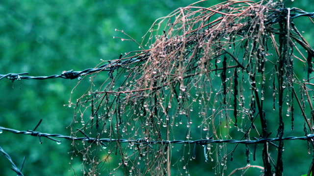 Barbed wire for protection during rainy season