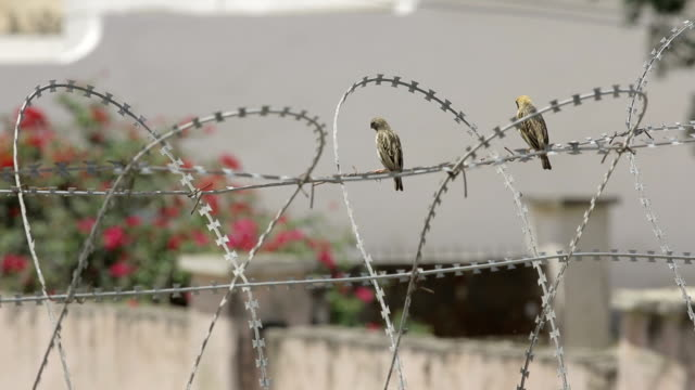 Barbed Wire  Freedom sentencing stock videos & royalty-free footage