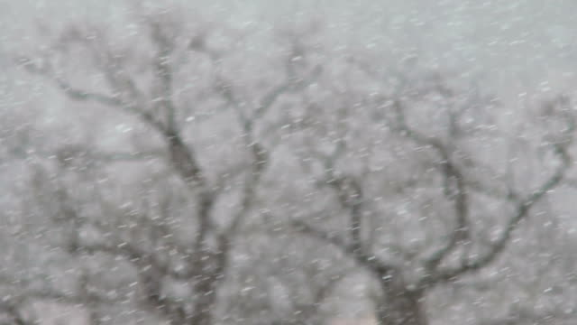 Bare branches of oaks under a snowfall. Winter forest. Snow against the background of a gray landscape. Slow motion video