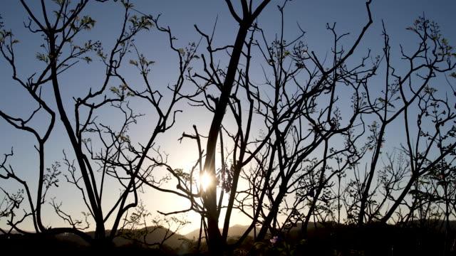 kala lövfällande vinter träd vid solnedgången - gren plantdel bildbanksvideor och videomaterial från bakom kulisserna