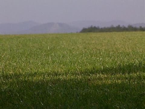 Bare foot on grass video
