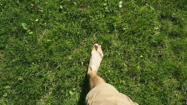 bare male legs go on a lawn (green grass) in the summer on the nature. summer vacation, nature walk and health concept. - staw człowieka filmów i materiałów b-roll
