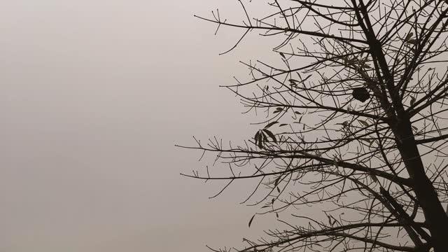 albero nudo e foglie piccole ondeggianti nel vento. - albero spoglio video stock e b–roll