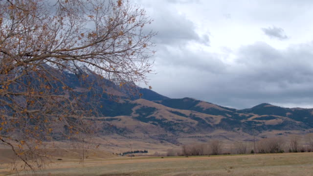 Bare tree canopy revealing scenic countryside & rocky mountains in Montana, USA video