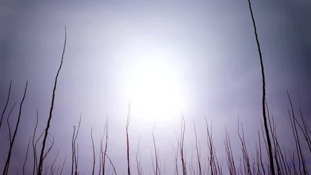 Bare tree video