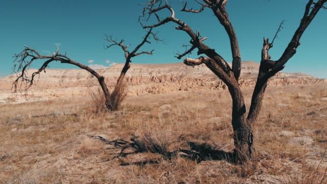 kala träd i kappadokien - utdöd bildbanksvideor och videomaterial från bakom kulisserna