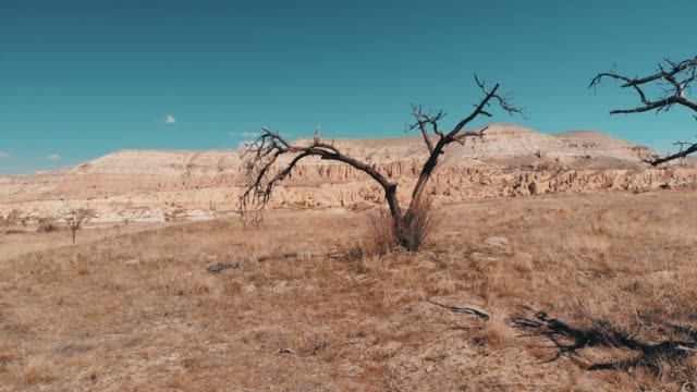 Bare Trees in Cappadocia