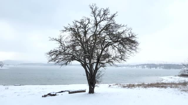 bare trees on lake shore on cloudy winter day - albero spoglio video stock e b–roll